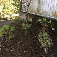 東京都福生市 樹木の剪定と庭の草むしり T様宅のサムネイル