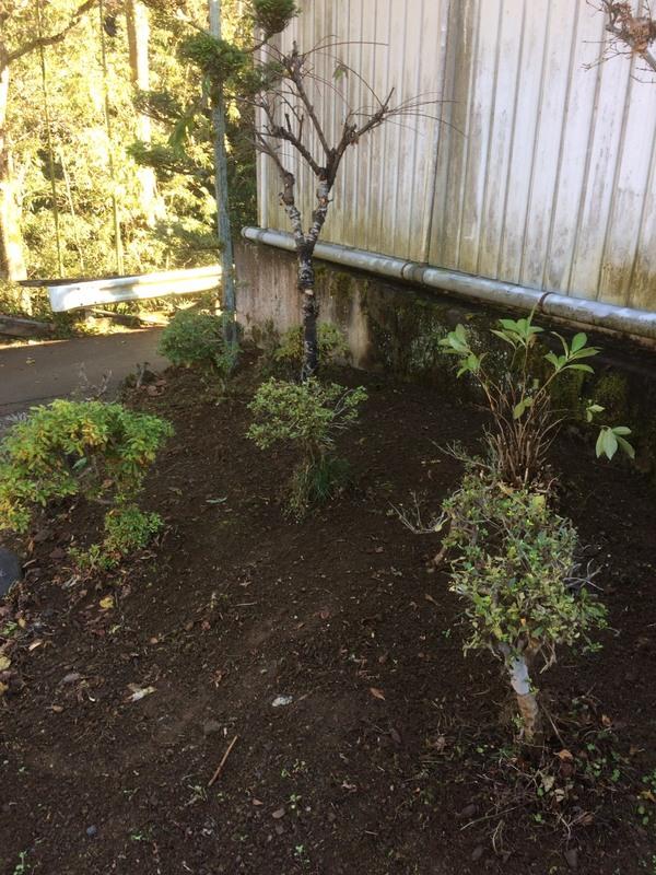 東京都福生市 樹木の剪定と庭の草むしり T様宅