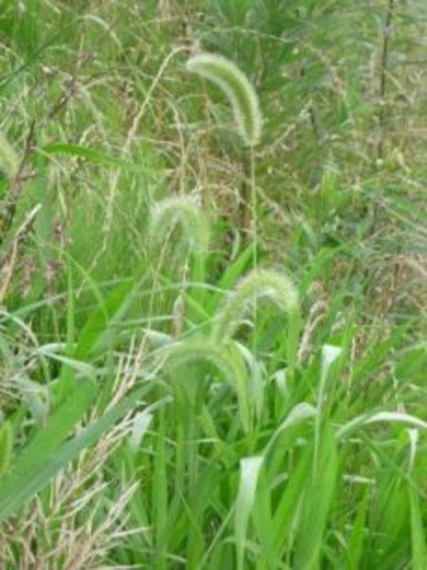 庭の草むしりトラブルやタイミングについて