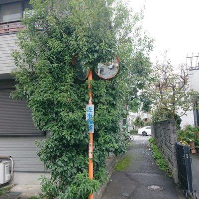 東京都東大和市 剪定 K様