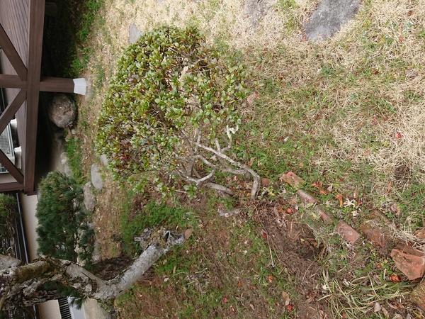 花壇 抜根