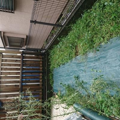 東京都国分寺市 草むしり・防草シート M様